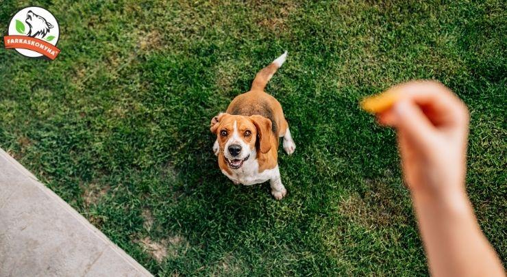 Hogyan állj át kutyáddal a barf étrendre és hogyan ne?