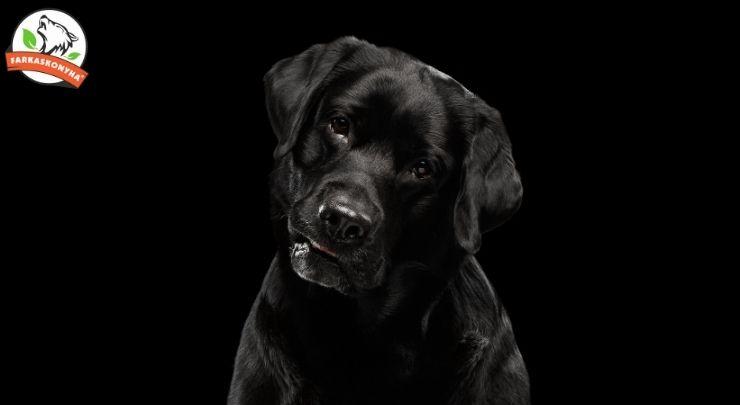 A fokhagyma állítólag mérgező a kutyákra... Hogy is van ez?