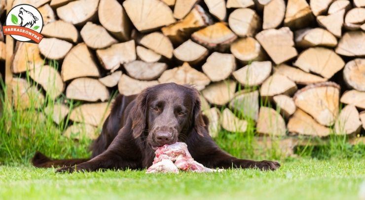 Gabonamentes kutyaétrend - egy új divat? … vagy tényleg káros a gabona?