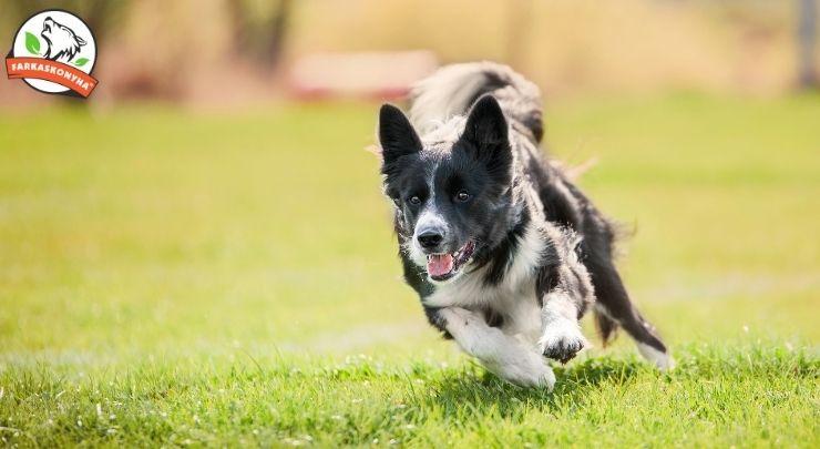 5+1 tanács kutyád ízületeinek védelméért