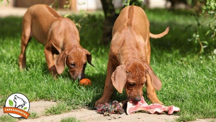Mikortól ehet egy kölyök csontos húst, és hogyan kezdd el?