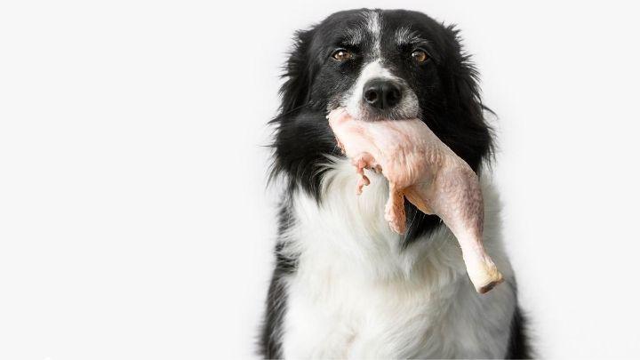 A nyers hús veszélyes, a táp viszont biztonságos??!!!
