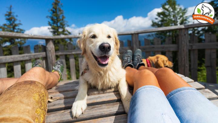 5 tipp a gondtalan kutyás nyaraláshoz
