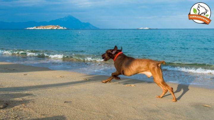 Nyaralás kutyával